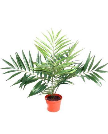 5824 45cm 350x435 - Plante - Parlour Palm