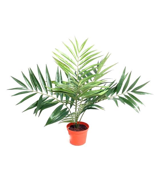 5824 45cm - Plante - Parlour Palm
