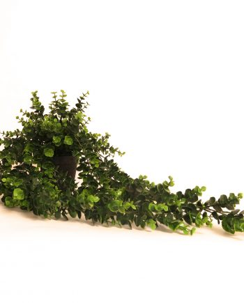 IMG 0515 350x435 - Hengeplante - 66 cm