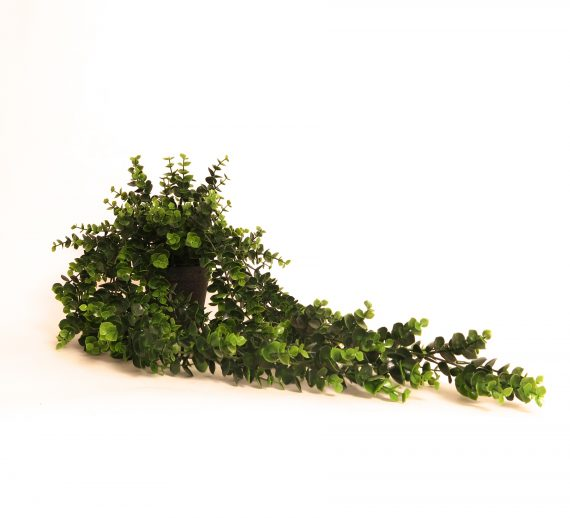 IMG 0515 570x518 - Hengeplante - 66 cm
