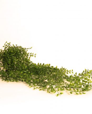 IMG 0520 350x435 - Hengeplante - 91 cm