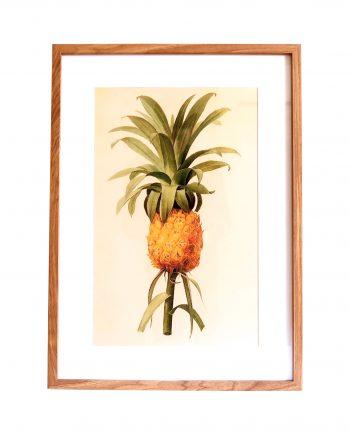 IMG 1776 1 350x435 - Bilde med ramme - Vintage ananas