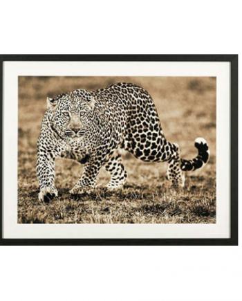 Skjermbilde 2018 04 19 kl. 13.33.49 350x435 - Leopard med treramme