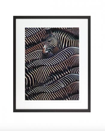 Skjermbilde 2018 04 19 kl. 13.51.05 350x435 - Zebra in Samburu ink treramme