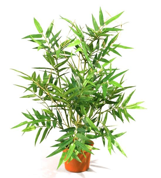 100 1 - Bambus - 38 cm