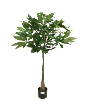 1163 80 480x750 350x435 - Pachyra tree - 56 cm