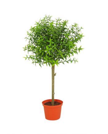 5769 350x435 - Eucalyptus - 37 cm