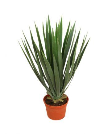5772  350x435 - Yucca baby - 42 cm