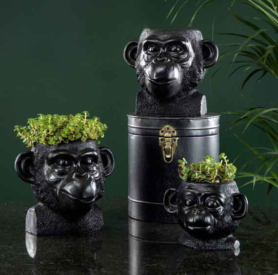 100823 1 570x563 - Blomsterpotte - Ape, kid
