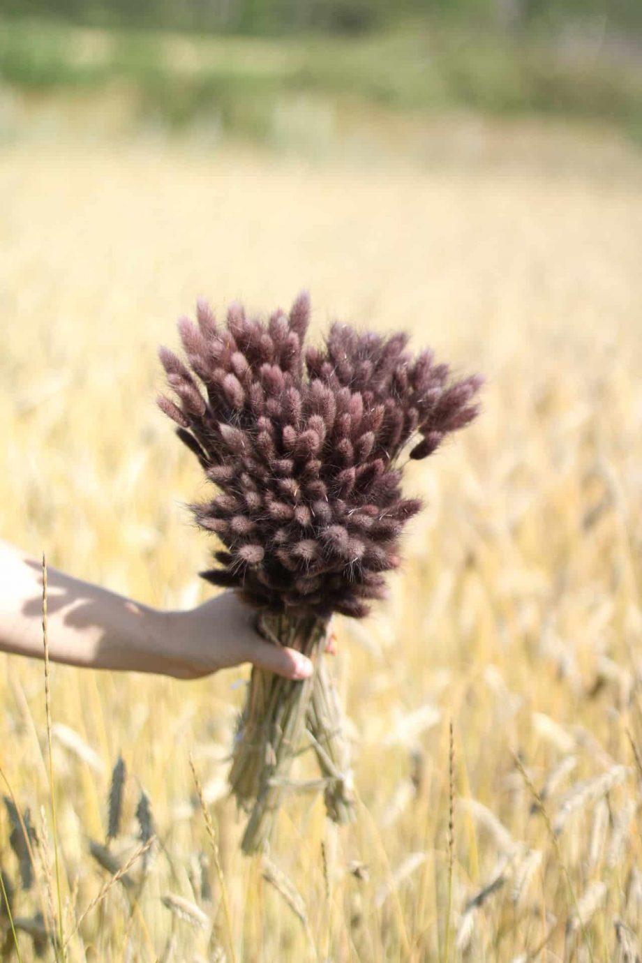 "IMG 0665 920x1380 - Lagurus ""Deep dark purple"""