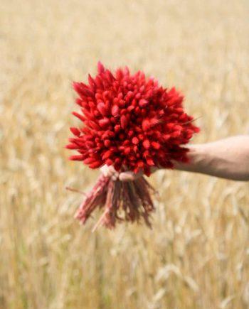 """IMG 0869 350x435 - Lagurus """"Red"""""""