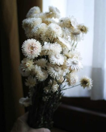 IMG 1088 1 e1565875710705 350x435 - Helichrysum - Natural white