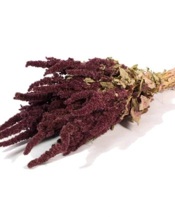 amaranthus natural red 350x435 - Amaranthus - Natural red