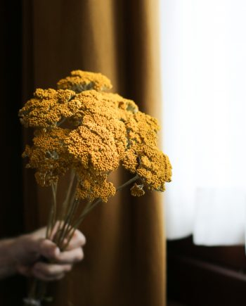 IMG 1815 2 350x435 - Achillea Parker - Natural Yellow