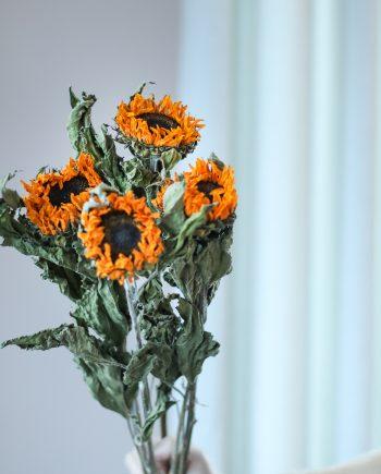 IMG 2756 350x435 - Mini sunflower