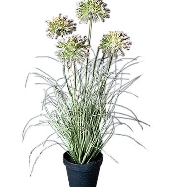 610003 350x380 - Plante - strå og blomster