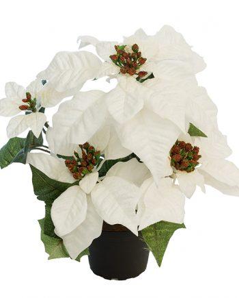 6595 10 1 350x435 - Plante - Julestjerne hvit, large