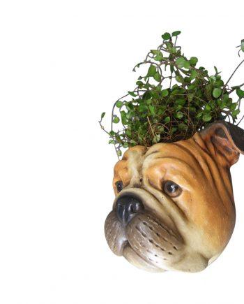 """FB20S122 1 350x435 - Blomsterpotte til vegg """"bulldog"""""""