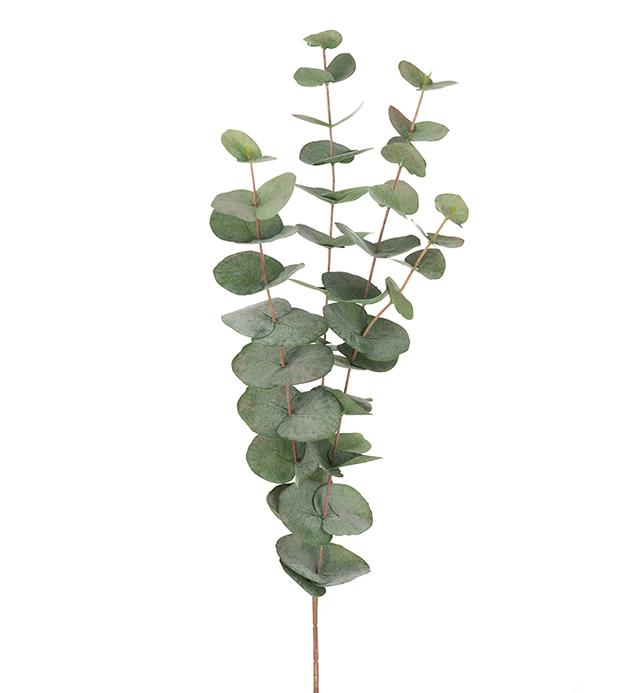 9953 95 - Snittblomst - Eucalyptus 60 cm