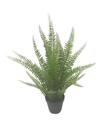 2372 Copy 1 350x435 - Plante - Boston Fern